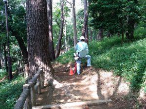 自然林内の縦横断測量